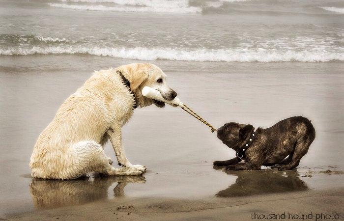 В Италии открыли пляж для собак