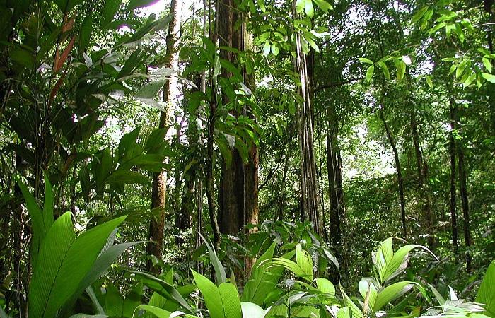 Тропический лес. Бразилия, штат Рорайма